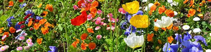 wildflower-garden-32